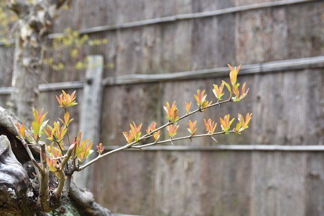 弘道館2017穀雨の庭