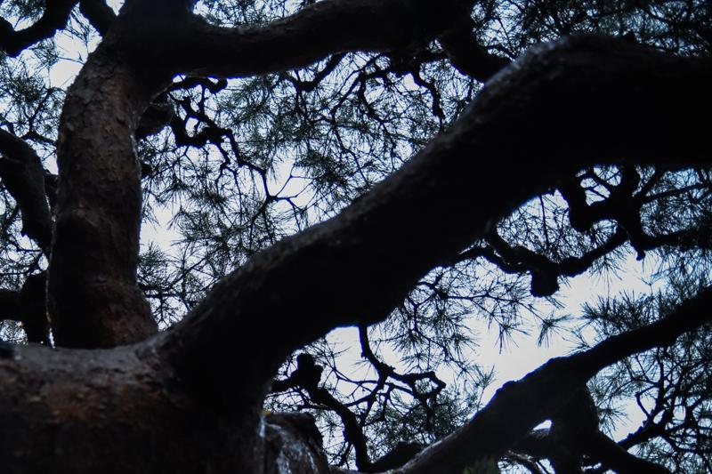 京都弘道館のお庭を見上げて
