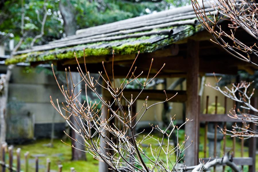 弘道館の春待ち